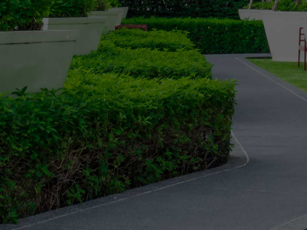 Tampa Commercial Landscaping