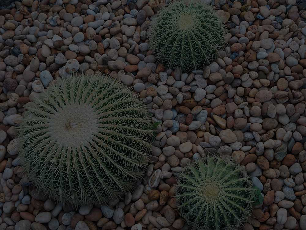 Tampa Xeriscaping